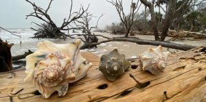Botany Bay Beach & Preserve on Edisto Island