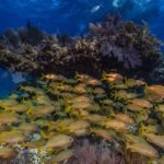 Coral reef at Biscayne National Park
