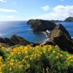 Yellow wildflowers on Anacapa Island at Channel Islands National Park